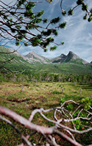 Desktop hintergrundbilder Norwegen Gebirge Wälder Ast Gras Northern Norway Natur