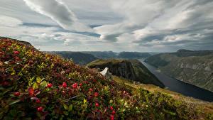 Fotos Norwegen Gebirge Landschaftsfotografie Beere Wolke Rogaland Natur