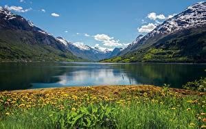 Desktop hintergrundbilder Norwegen Berg Sommer Taraxacum Fjord Nordfjord Natur