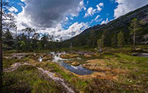 Fotos Norwegen Parks Berg Bäume Wolke Rago National Park
