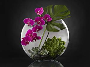 Hintergrundbilder Orchideen Design Blumen