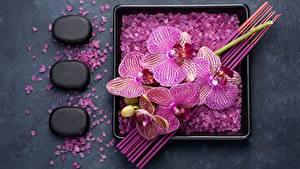 Picture Orchids Stones Salt Flowers