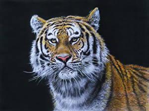 Hintergrundbilder Gezeichnet Große Katze Tiger Starren Kopf Schwarzer Hintergrund Schnurrhaare Vibrisse Tiere