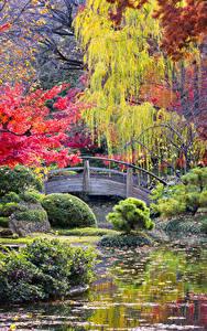 Hintergrundbilder Park Herbst Teich Strauch