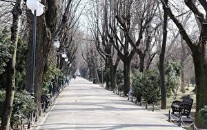 壁纸、、公園、ルーマニア、ベンチ、木、街灯、小路、歩道、Bucharest、都市