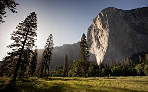 Hintergrundbilder Park Vereinigte Staaten Gebirge Yosemite Felsen Gras Bäume mount El Capitan Natur