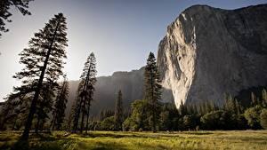 Bilder Park USA Yosemite Kalifornien Felsen Gras Bäume