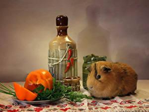 Fotos Peperone Hausmeerschweinchen Flasche Tiere