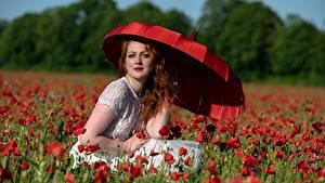 Bilder Mohnblumen Rot Rotschopf Blick Sitzend Regenschirm Mädchens