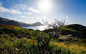 Фотографии Португалия Побережье Гора Камень Солнце Холмы Деревья Трава Sao Lourenco, Madeira