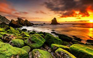 Bilder Portugal Morgendämmerung und Sonnenuntergang Küste Stein Laubmoose Felsen Praia Adraga Beach Natur