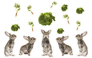 Bilder Kaninchen Kohl Mohrrübe Weißer hintergrund Tiere