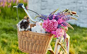 Bilder Kaninchen Lupinen Weidenkorb Fahrrad ein Tier Blumen