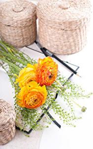 Hintergrundbilder Hahnenfuß Weißer hintergrund Drei 3 Gelb Blumen