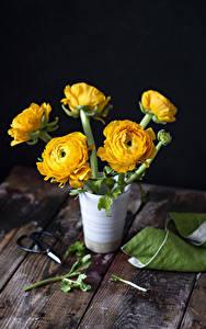 Fotos Ranunkel Bretter Vase Gelb Blumen