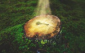 Desktop hintergrundbilder Lichtstrahl Laubmoose Baumstumpf Schlüssel