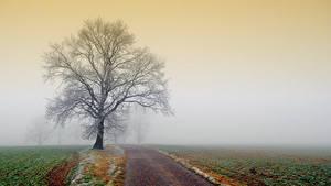 Bilder Wege Acker Bäume Nebel