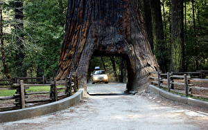 Pictures Roads Park USA Trees Arch California Sierra Nevada, Sequoia National Park Nature
