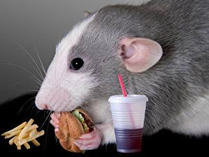 Hintergrundbilder Nagetiere Mäuse Burger Fritten Fast food Trinkglas Schnauze Tiere