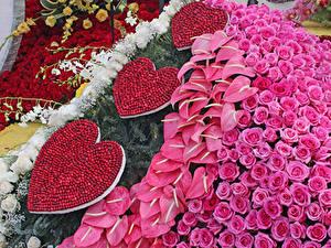 Bilder Rosen Flamingoblumen Design Herz Pasadena Blumen
