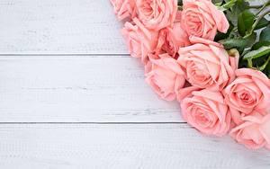 Desktop hintergrundbilder Rosen Blumensträuße Rosa Farbe Bretter Vorlage Grußkarte Blumen