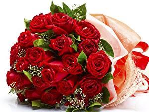 Bilder Rose Sträuße Rot Blüte