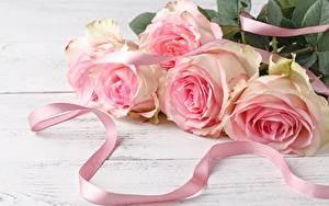 Fotos Rosen Blumensträuße Band Rosa Farbe Blumen