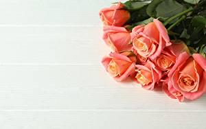 Hintergrundbilder Rosen Blumensträuße Bretter Vorlage Grußkarte Rosa Farbe Blüte
