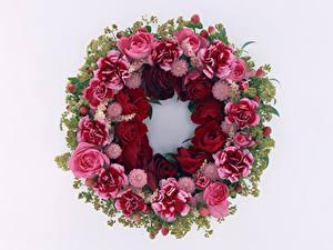 Hintergrundbilder Rosen Nelken Weißer hintergrund Design Blumen