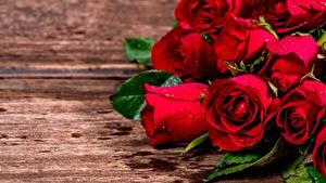 Bilder Rosen Großansicht Rot Blumen