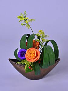Desktop hintergrundbilder Rosen Eustoma Ikebana Farbigen hintergrund Design Blumen
