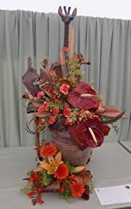 Fotos Rosen Gerbera Flamingoblumen Design Blumen