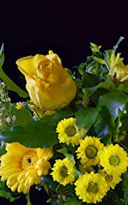 Hintergrundbilder Rose Gerbera Chrysanthemen Schwarzer Hintergrund Gelb Blumen