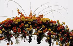 Hintergrundbilder Rosen Weintraube Weißer hintergrund Blüte