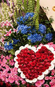 Fotos Rosen Hortensien Chrysanthemen Design Herz Pasadena Blumen