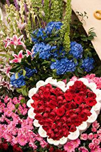 Fotos Rose Hortensien Chrysanthemen Design Herz Pasadena Blüte