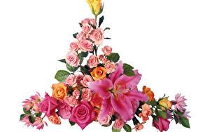 Bilder Rose Lilien Blumensträuße Weißer hintergrund