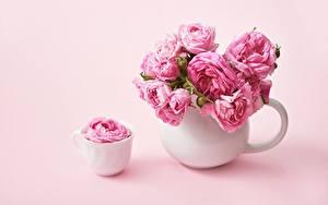 Fotos Rosen Rosa Farbe Tasse Vase Blüte