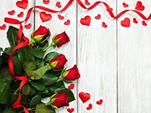 Fotos Rose Rot Band Herz Bretter Vorlage Grußkarte Blüte