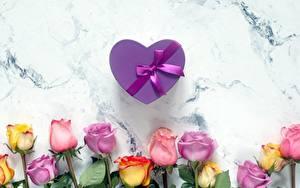 Bilder Rose Valentinstag Schleife Schachtel Geschenke Herz Blüte