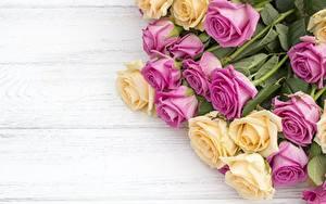 Bilder Rose Bretter Blüte