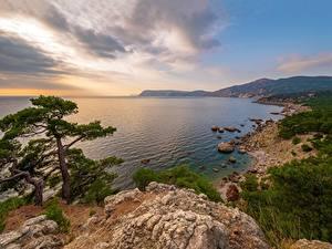 Fotos Russland Krim Küste Meer Felsen Bäume