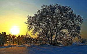 Bilder Russland Winter Sonnenaufgänge und Sonnenuntergänge Bäume Schnee Sonne