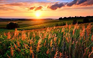 Hintergrundbilder Landschaftsfotografie Sonnenaufgänge und Sonnenuntergänge Acker Himmel Wolke Sonne Natur
