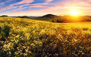 Hintergrundbilder Landschaftsfotografie Sonnenaufgänge und Sonnenuntergänge Acker Sonne