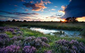 Fotos Landschaftsfotografie Morgendämmerung und Sonnenuntergang Himmel Wolke Gras Sumpf Heather Flowers