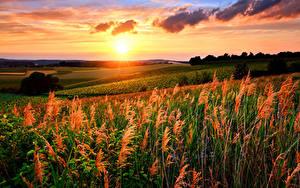 Bilder Landschaftsfotografie Sonnenaufgänge und Sonnenuntergänge Acker Sonne
