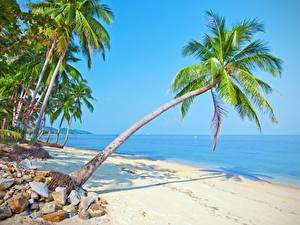 Fotos Meer Palmen Strand