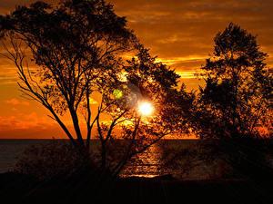 Fotos Meer Sonnenaufgänge und Sonnenuntergänge Bäume Silhouetten Sonne