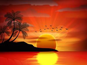 Bilder Meer Vektorgrafik Palmengewächse Sonne Silhouette Natur